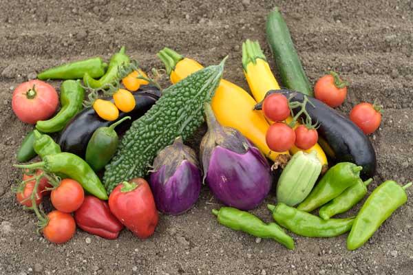 okayama-organic・無農薬食材販売・有機野菜