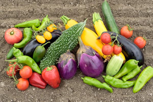 おかやまオーガニック・有機野菜・無農薬・農家