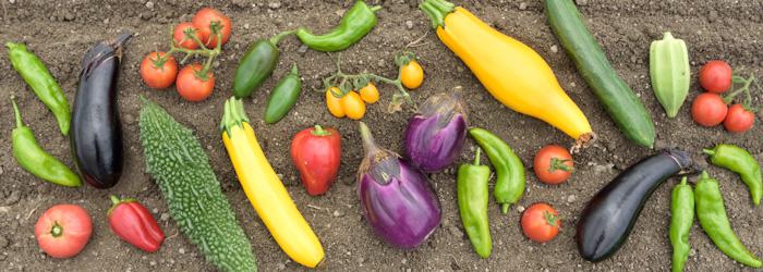 岡山・オーガニック野菜・新鮮な有機野菜