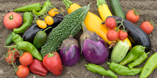 岡山・農家・有機野菜・添加物不使用